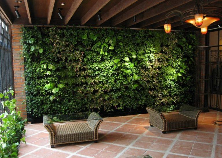 Зеленая стена – вертикальное озеленение