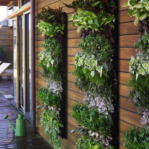 Варианты вертикального озеленения балкона