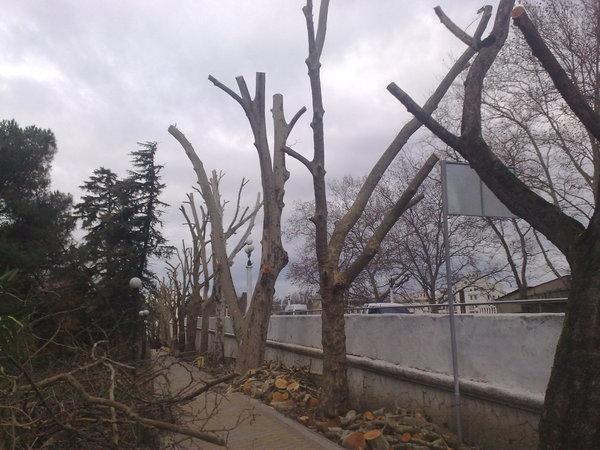 Стоимость очистки участка от кустарников и деревьев с помощью спецтехники
